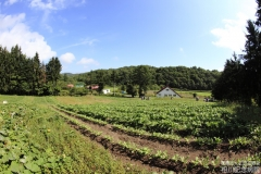 farm_040