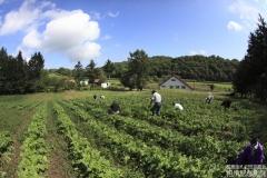 farm_058